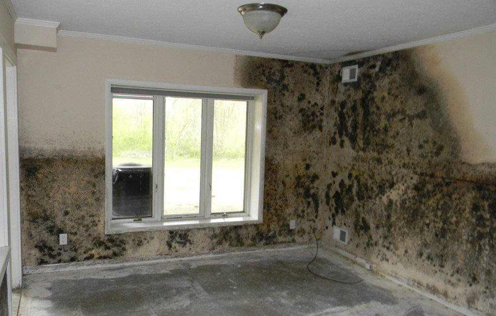 how to protect your home from mold