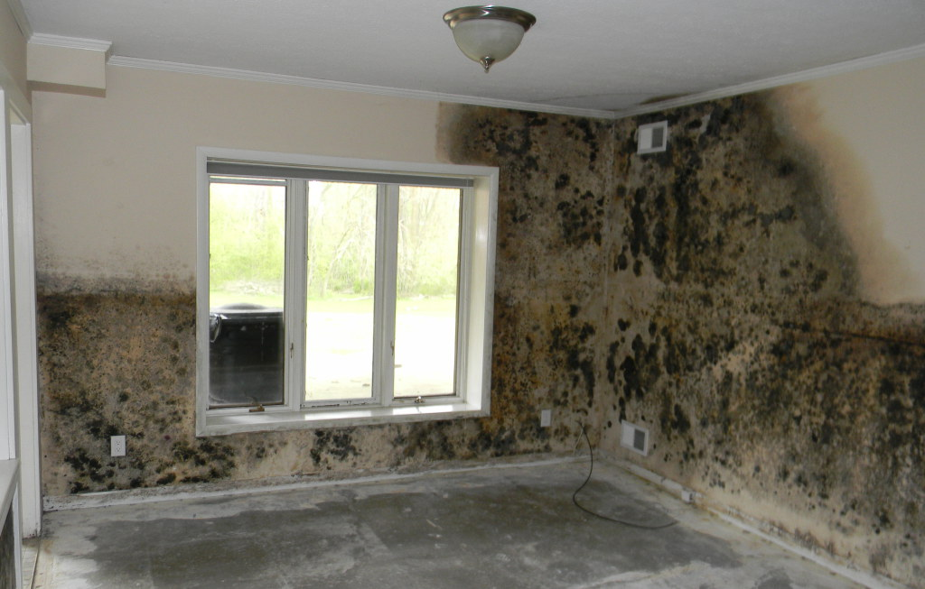 Black Mold Warnings With Remediation And Recovery Tips